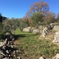Olive groves on hike to Mons